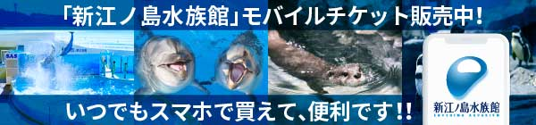 新江ノ島水族館入場券